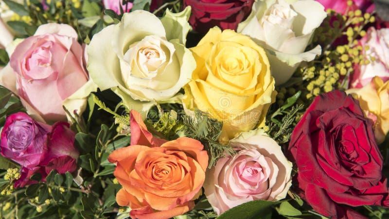 多彩多姿的玫瑰 图库摄影