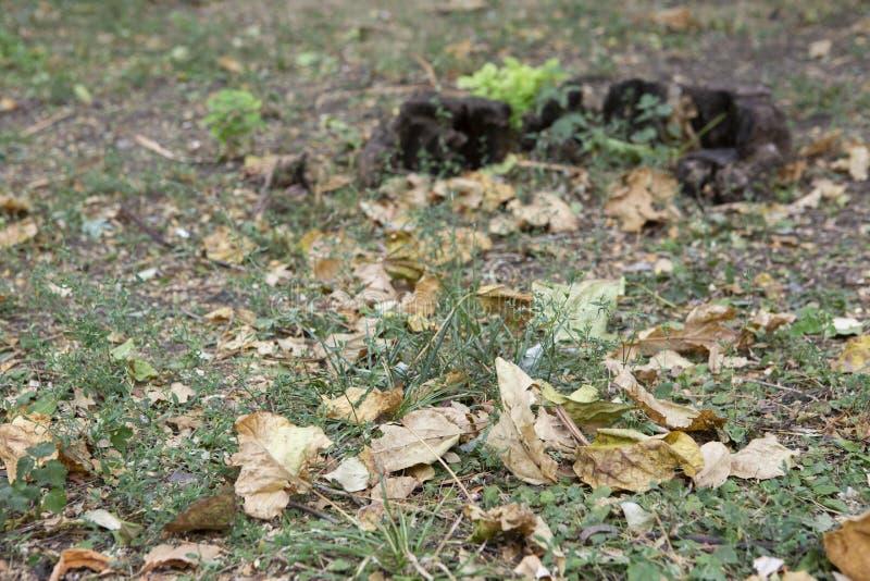 多彩多姿的秋天风景视图的关闭在绿草离开 库存图片