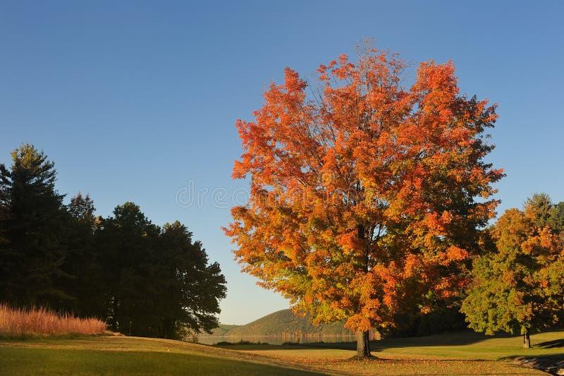 多彩多姿的结构树 库存图片