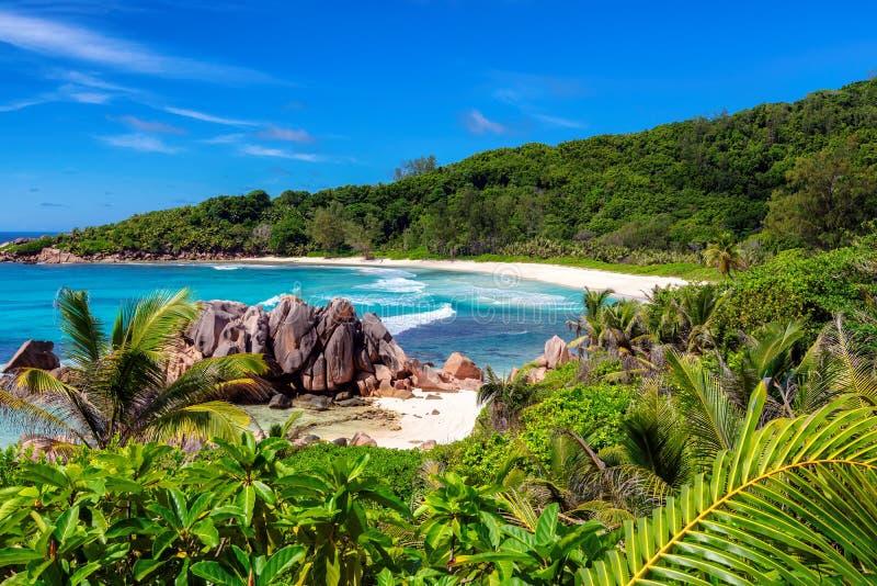 多数美丽的Anse椰树靠岸在La digue,塞舌尔群岛 图库摄影