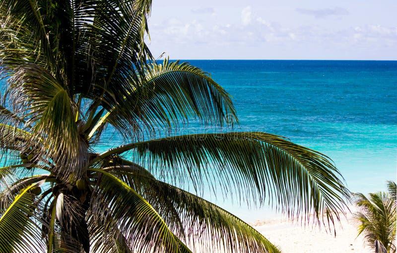 巴巴多斯海景 库存图片