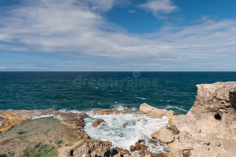 巴巴多斯海洋和岩石在动物花旁边陷下 加勒比海海岛 库存照片