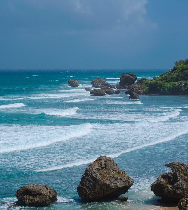 巴巴多斯Bathsheba海岸 免版税库存图片