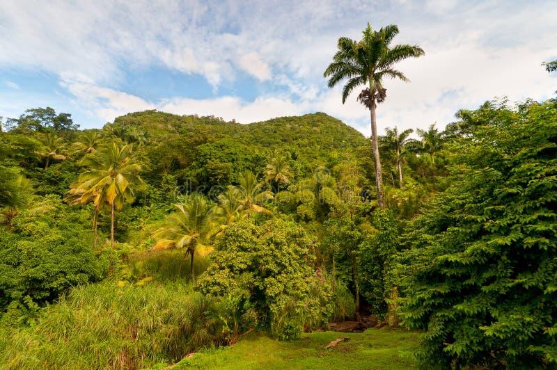 多明尼加雨林 库存图片