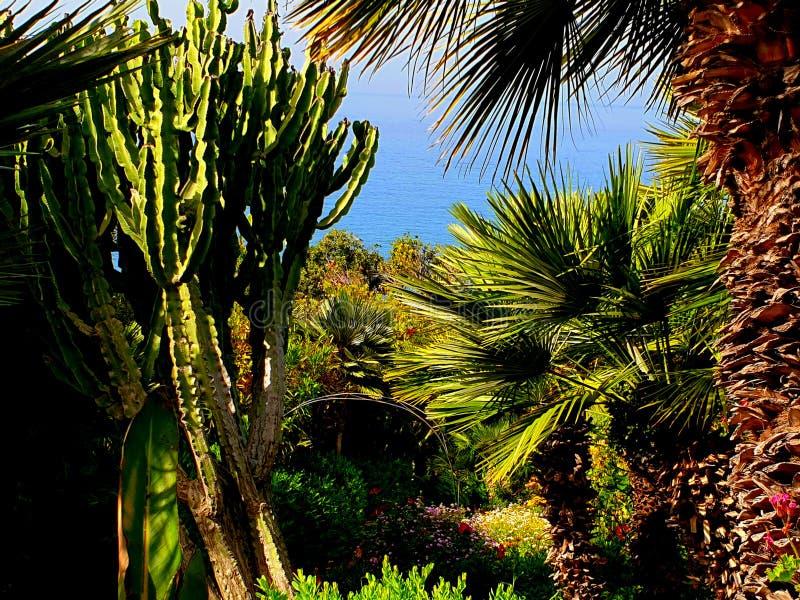 多汁仙人掌和植物 免版税库存图片