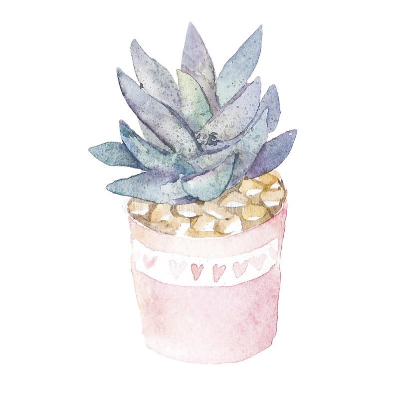 多汁家庭植物 免版税库存图片