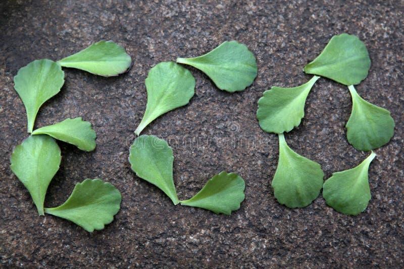 多汁植物叶子自然石背景没人 免版税库存照片