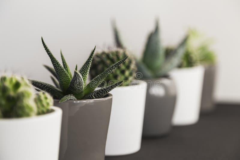 多汁植物和仙人掌行透视图在小罐 免版税库存照片