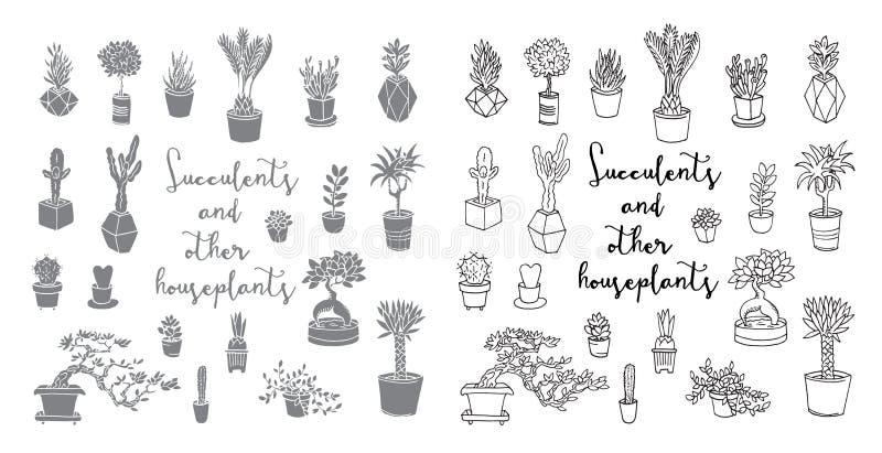 多汁植物和其他室内植物 皇族释放例证