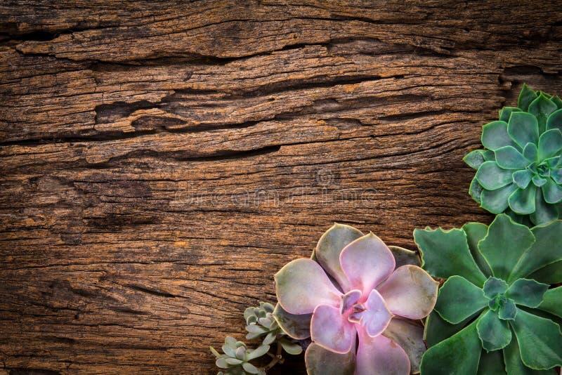 多汁植物或仙人掌的安排在木背景作为fram 免版税库存图片