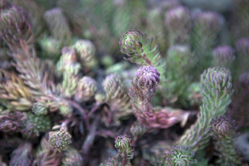 多汁植物春天庭院 免版税库存照片