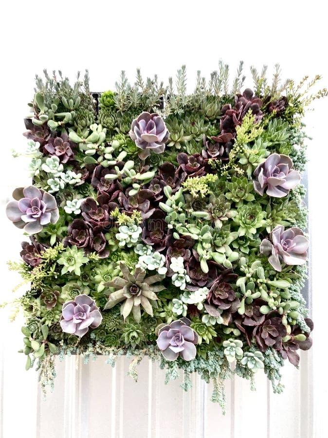 多汁植物生存墙壁  免版税库存照片
