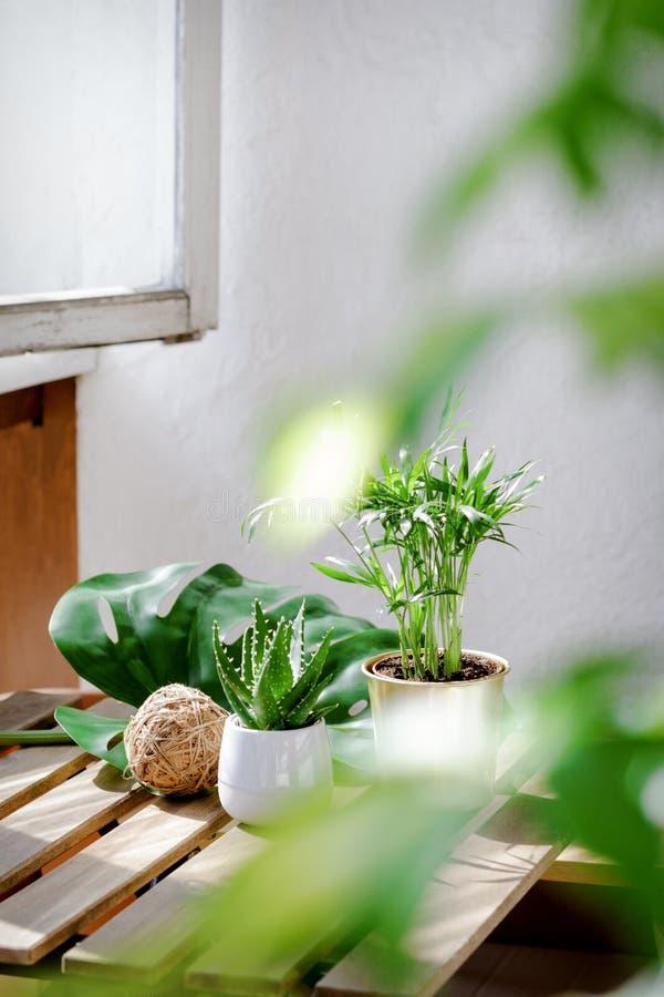 多汁植物芦荟和棕榈用不同的罐 图库摄影