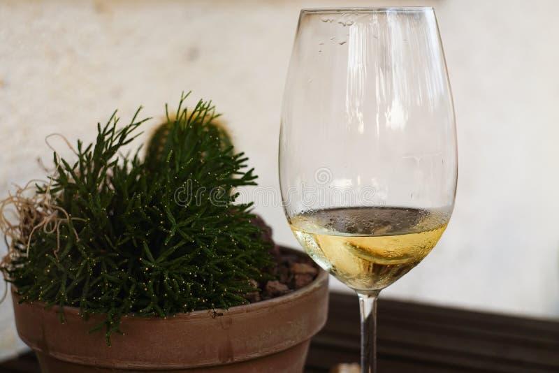 多汁植物近身和酒 免版税图库摄影