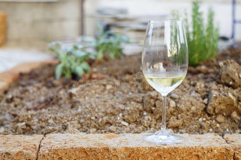 多汁植物近身和酒 免版税库存图片
