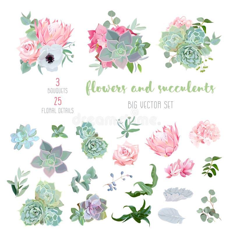多汁植物,普罗梯亚木,上升了,银莲花属, echeveria,八仙花属,装饰植物大传染媒介收藏 皇族释放例证