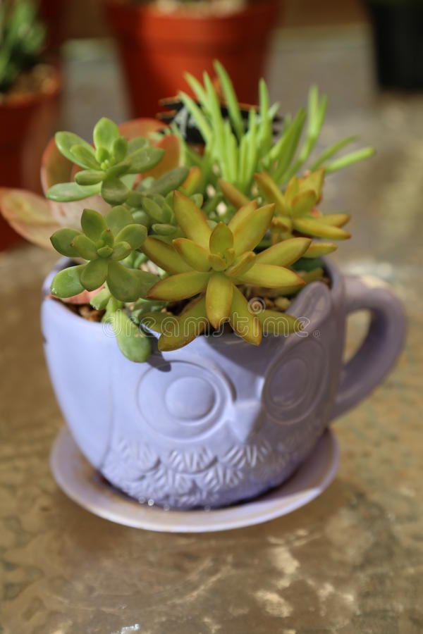 多汁植物 库存照片