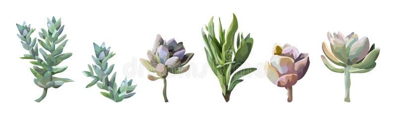 多汁花植物水彩手拉的美丽的collectio 库存例证