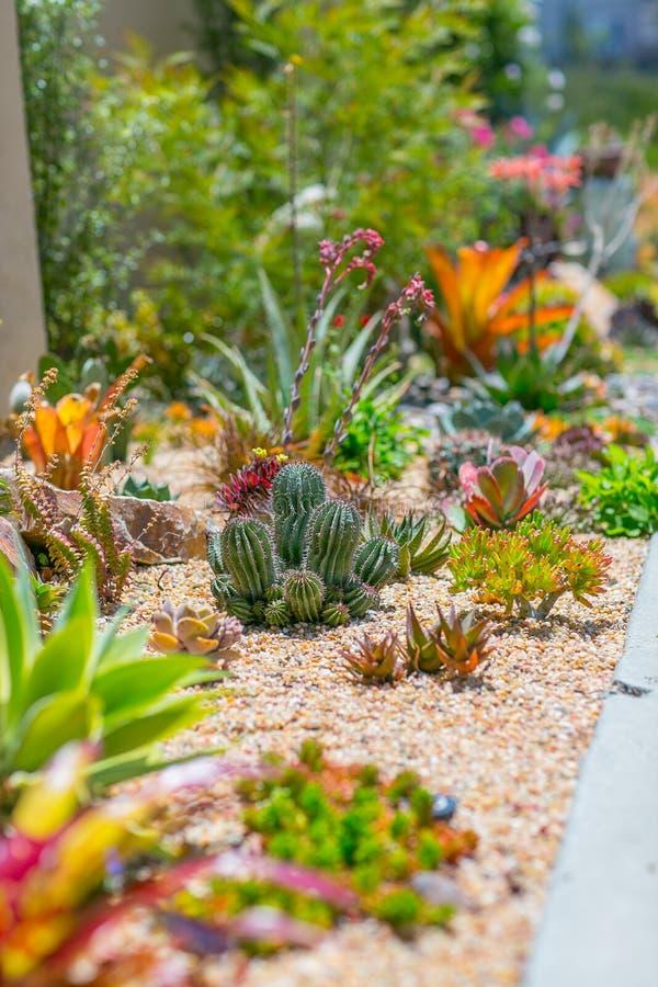多汁水明智的沙漠庭院 图库摄影
