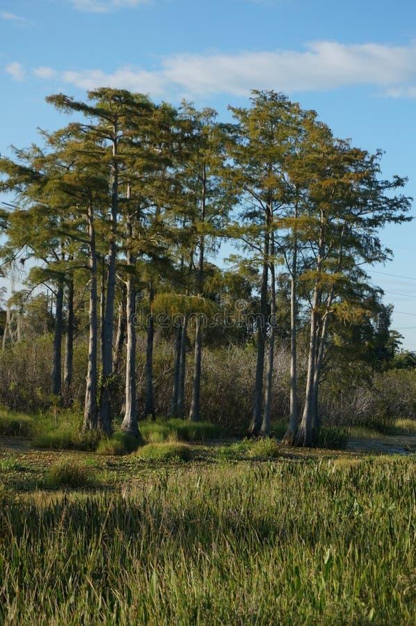 多沼泽的支流在佛罗里达 库存图片