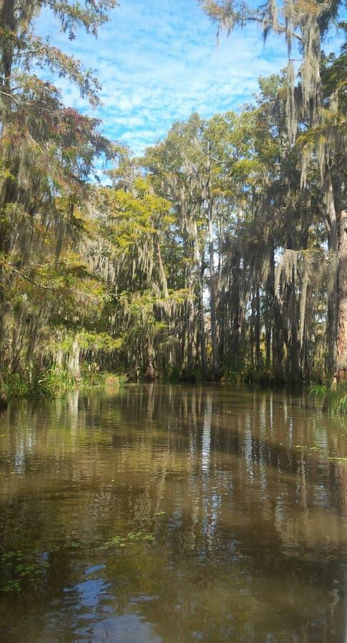 多沼泽的支流树 免版税库存照片