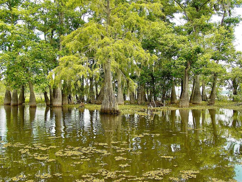 多沼泽的支流路易斯安那 免版税库存图片