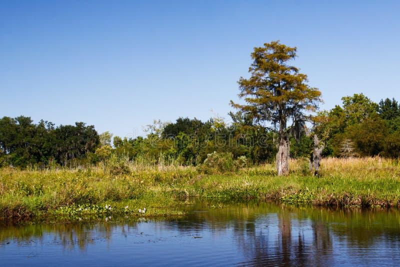 多沼泽的支流-水平的横向 免版税图库摄影