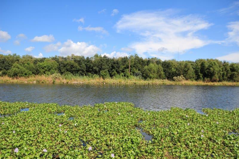 多沼泽的支流Lafourche,路易斯安那 库存图片
