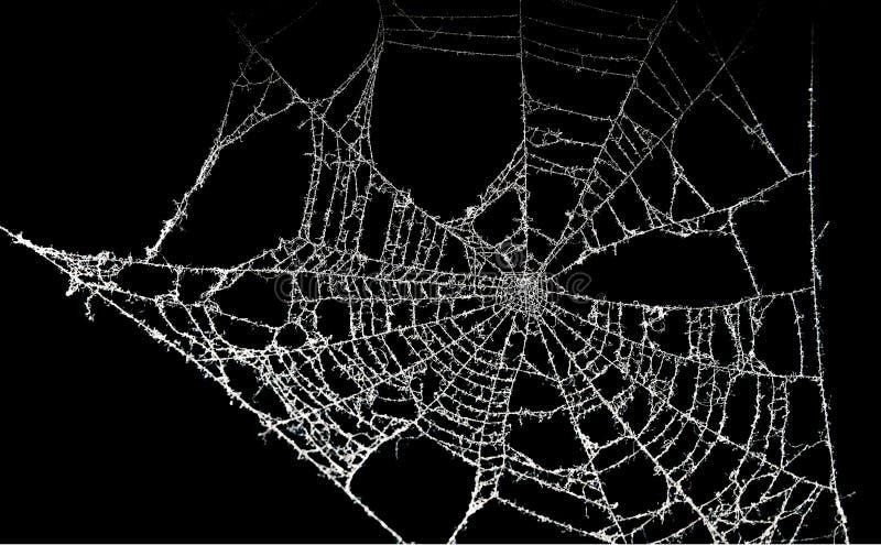 多灰尘的蜘蛛网 免版税库存图片
