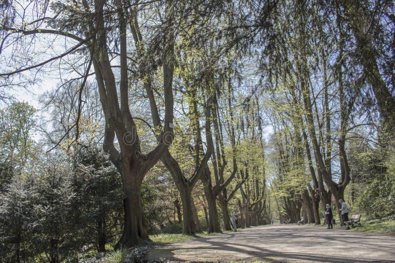 多特蒙德,德国鲁尔区,北部莱茵河西华里亚,德国- 2018年4月16日:龙贝格公园是欧洲庭院网络的一部分 免版税图库摄影