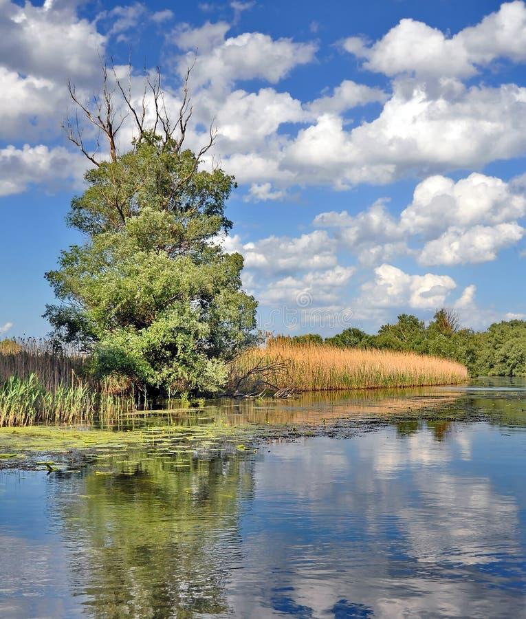 多瑙河三角洲 库存照片