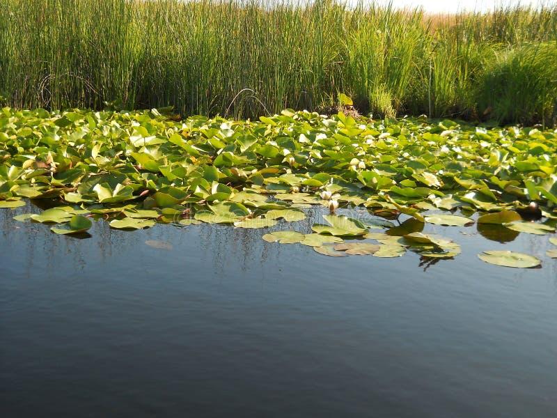 多瑙河三角洲 库存图片
