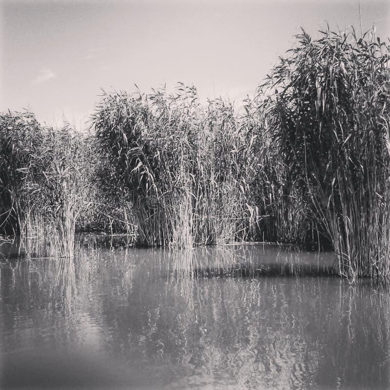 多瑙河秀丽  免版税库存图片