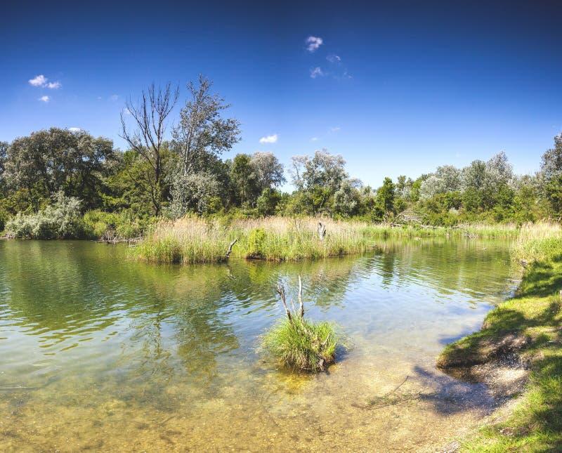 多瑙河Auen国家公园维也纳的池塘Dechantlacke 库存照片