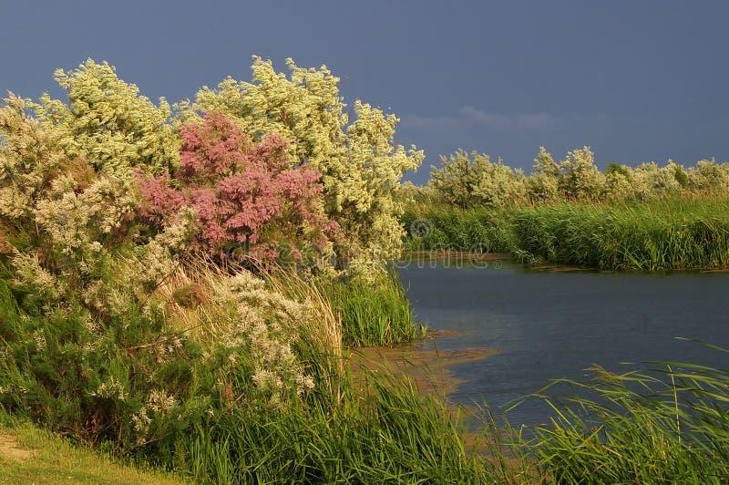 多瑙河Delta 库存照片
