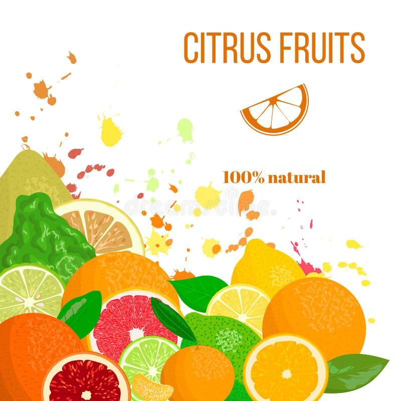 水多的柑橘水果新鲜和 香柠檬,柠檬,葡萄柚,石灰,普通话,柚,桔子,血橙与飞溅 库存例证