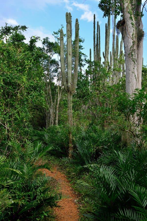 多米尼加共和国的密林 库存图片