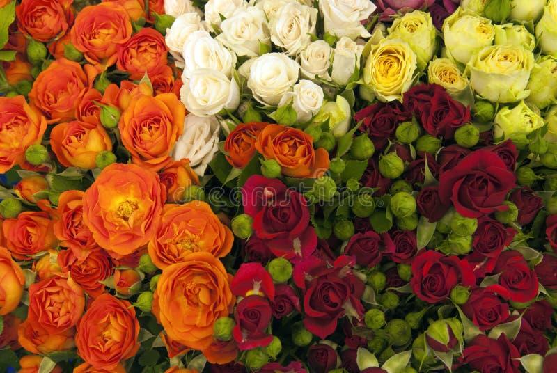多色玫瑰花 免版税库存照片