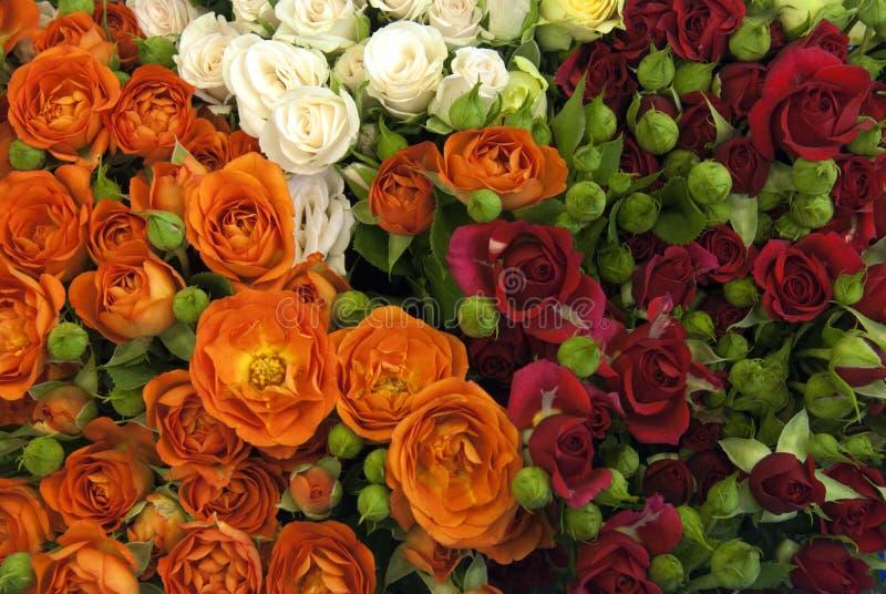 多色玫瑰花 库存照片