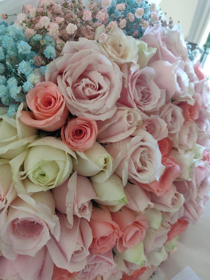 多色玫瑰 库存图片