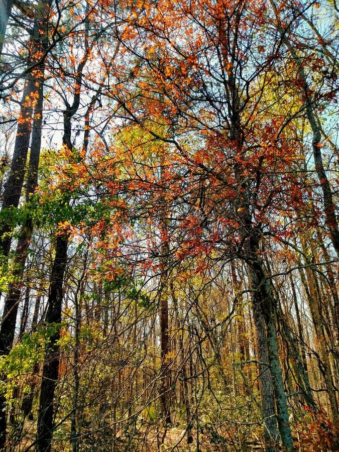 多色的树 免版税库存图片