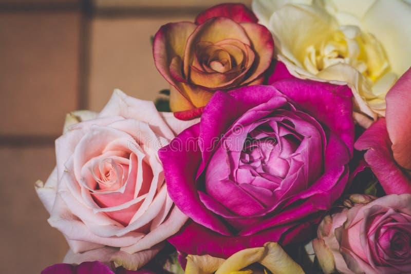 多色的玫瑰葡萄酒花卉背景  免版税库存照片