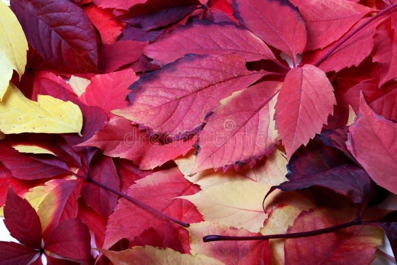 多色秋天叶子背景  库存图片