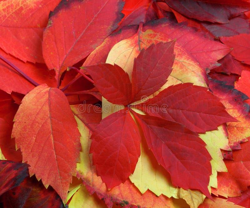 多色秋天叶子自然本底  免版税库存照片