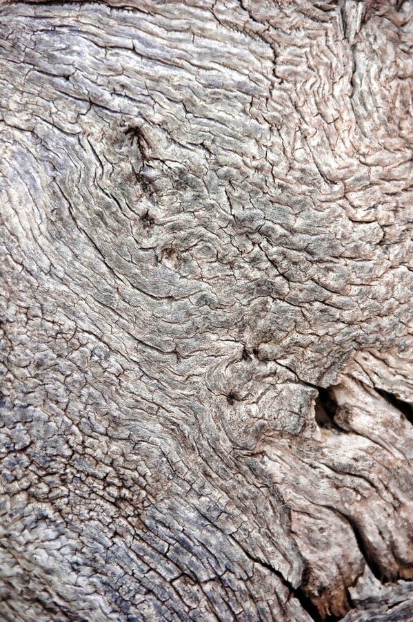 多节木头 免版税库存图片