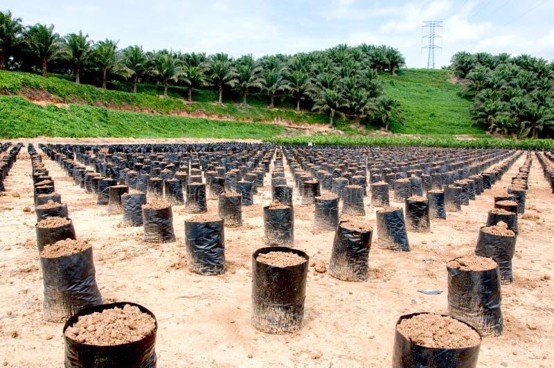 多袋子行在棕榈油nusey的 免版税库存照片
