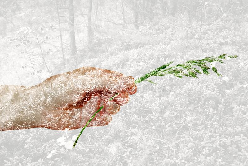 多重曝光:有草叶的手和森林丛林 免版税库存照片
