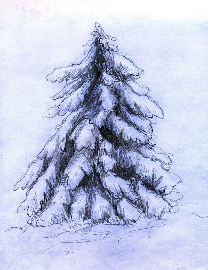 多雪冷杉的草图 皇族释放例证