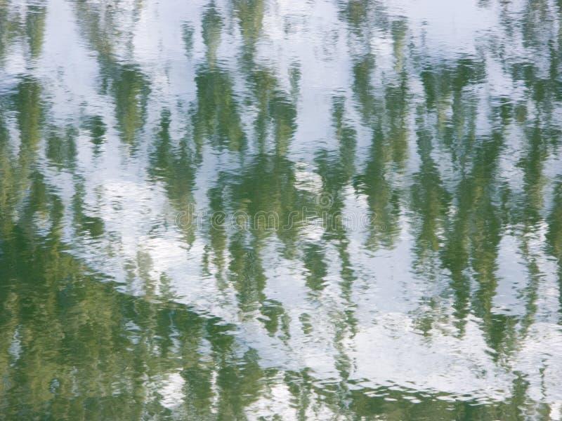 多雪森林的反映 库存图片