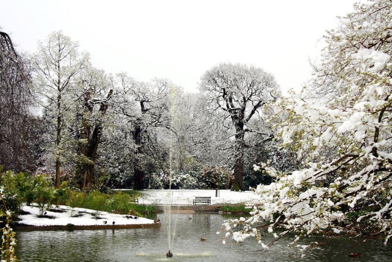 多雪的公园 免版税库存照片